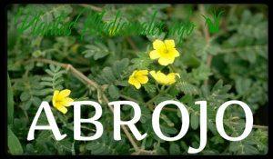 plantas medicinales abrojo