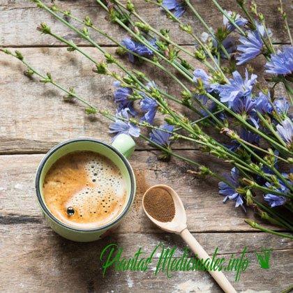 propiedades café de achicoria