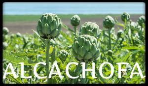 plantas medicinales alcachofa
