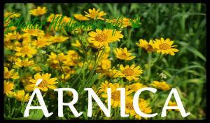 plantas medicinales árnica
