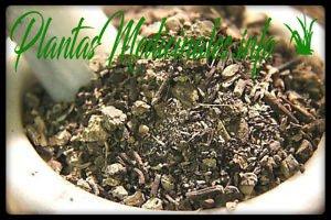 beneficios curativos planta cohosh negro
