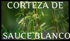 corteza sauce blanco plantas medicinales