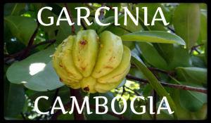 plantas medicinales garcinia cambogia