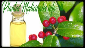 aceite esencial de gaulteria propiedades medicinales