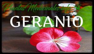 geranio plantas medicinales