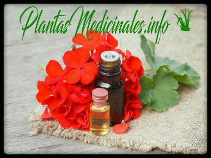 propiedades y beneficios del aceite esencial de geranio