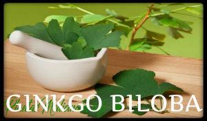 plantas medicinales ginkgo biloba
