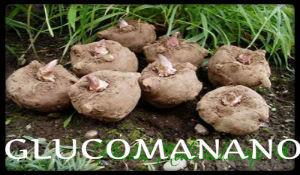 plantas medicinales glucomanano