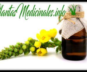 aceite esencial de gordolobo para que sirve