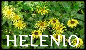 plantas medicinales helenio