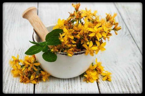 usos medicinales hierba de san juan