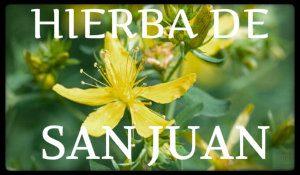 hierba de san juan plantas medicinales