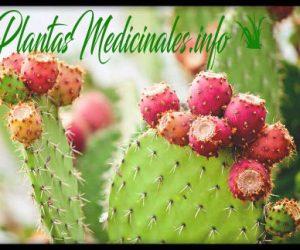nopal planta medicinal