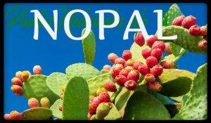 nopal plantas medicinales