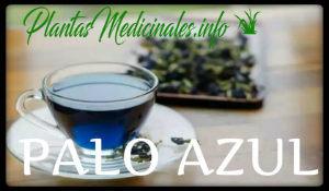 palo azul plantas medicinales