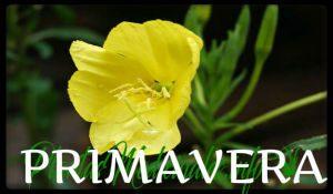 primavera plantas medicinales