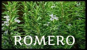 plantas medicinales romero