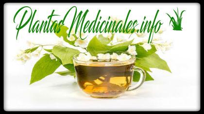 usos y beneficios del te de jazmin
