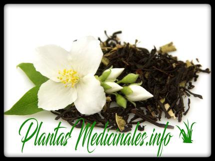propiedades medicinales del jazmin