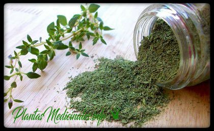 hierba medicinal tomillo
