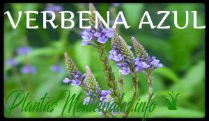 plantas medicinales verbena azul